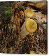 Yellow Mushrooms Canvas Print