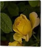 Yellow N Leaf Canvas Print
