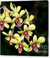 Yellow Orchid Cascade Canvas Print