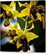 Yellow Orchids Canvas Print