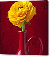 Yellow Ranunculus In Red Pitcher Canvas Print
