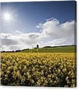 Yellow Rapeseed Field, Newgrange Canvas Print