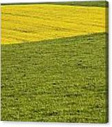Yellow Rapeseed Growing Amongst Green Canvas Print