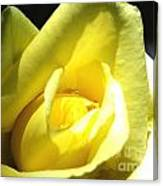 Yellow Rose For Love Canvas Print