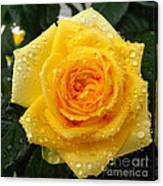 Yellow Rose With Water Droplets Canvas Print