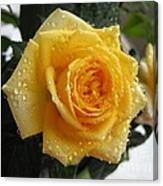 Yellow Roses With Water Droplets Canvas Print