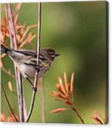 Yellow-rumped Warbler - Peaceful Pastels Canvas Print