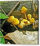 Yellow Sandpaper Mushrooms Canvas Print