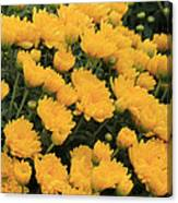 Yellow Sea Of Flowers Canvas Print