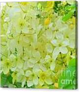 Yellow Shower Tree - 5 Canvas Print