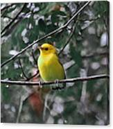 Yellow Songbird Canvas Print