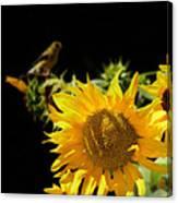 Yellow Sunflowers Canvas Print