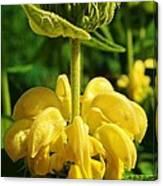 Yellow Suprise Canvas Print