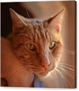 Yellow Tabby Canvas Print