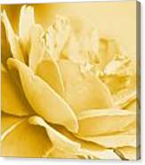 Yellow Tone Rose  Canvas Print