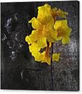 Yellow Trumpet Canvas Print