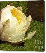 Yellow Waterlily Bud Canvas Print