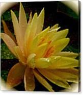Yellow Waterlily Macro Canvas Print