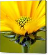Yellow Wild Flower - Side Canvas Print