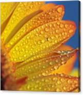 Yellow Wild Flower Canvas Print