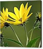 Yellow Wildflower 2 Canvas Print