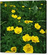 Yellow Wildflowers Blooming In Lush Canvas Print