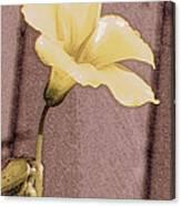 Yellow Wood Sorrel Canvas Print