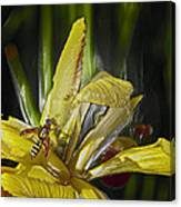 Yellowjacket Canvas Print