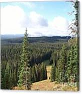 Yellowstone High Elevation Forest Canvas Print
