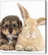 Yorkipoo Pup With Sandy Rabbit Canvas Print