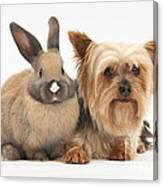 Yorkshire Terrier And Young Rabbit Canvas Print