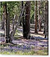 Yosemite Lupin Canvas Print