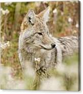 Young Coyote Canis Latrans In A Forest Canvas Print