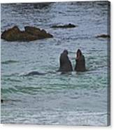 Young Elephant Seals Sparring Canvas Print
