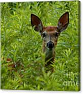 Young Fawn Playing Peek A Boo  Canvas Print