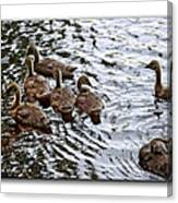 Young Geese Canvas Print