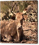 Young Longhorn Steer Canvas Print