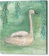 Young Swan Under Willow Tree Canvas Print