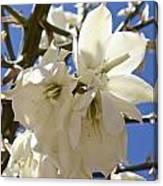 Yucca Flowers Canvas Print