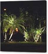 Yucca Spot Lighting Teakwood Island Canvas Print
