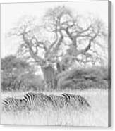 Zebra And Tree Canvas Print
