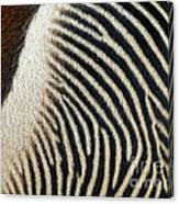 Zebra Caboose Canvas Print