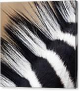 Zebra Equus Quagga Mane, Khama Rhino Canvas Print