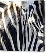 Zebra Face  Canvas Print