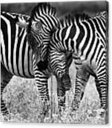 Zebra Hug 2 Canvas Print