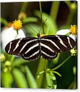 Zebra Longwing And Flowers Canvas Print