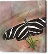 Zebra Longwing Butterfly-3 Canvas Print