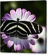 Zebra Longwings Canvas Print