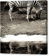 Zebra Reflection  Canvas Print