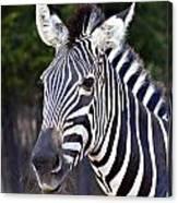 Zebra Symmetry  Canvas Print